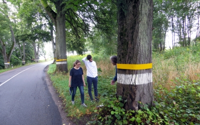 """Small case study """"Old Lime-trees Lane is not a Line of Dangeroous Trees"""" conducted by the biology teacher Samoshko N.A."""