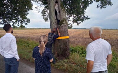 """The commission consisting of expert-entomologist Alexeev V.I. (Amber Museum), specialist in environmental protection Iliina L.A. (MPI """"Boar of CD, IS and EP""""), engineer Balyan A.A. (MBI """" Blagoustroistvo"""" (Improvements). Observation of a hollow lime-tree inhabited by Osmoderma eremita Scopoli"""