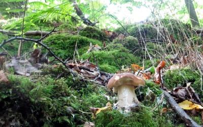 Белые грибы (в центре города!) наводят на мысль о полноценности экосистемы.