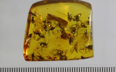 Роение мух-долихоподид (Dip., Dolichopodidae)