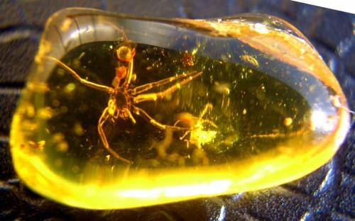 Рис. 54. Экзувии пауков