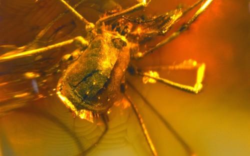 Рис. 96. Сенокосцы (Arachnida, Opiliones)