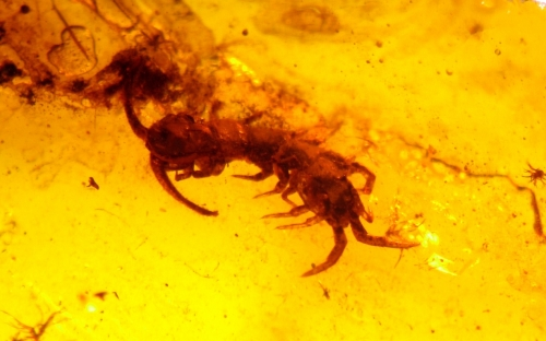 Рис. 16. Многоножки-костянки (Lithobiidae)